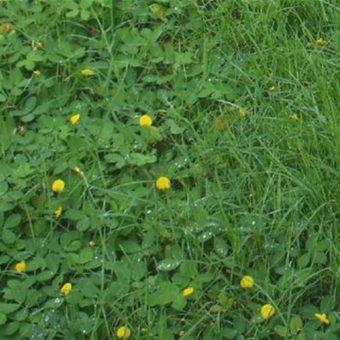 วัชพืชคืออะไรและมีวิธีการกำจัดอย่างไร