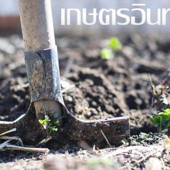 แนวทางเกษตรอินทรีย์ ช่วยเหลือแบบเกื้อกุลกัน
