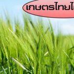 เกษตรไทยไอดอล
