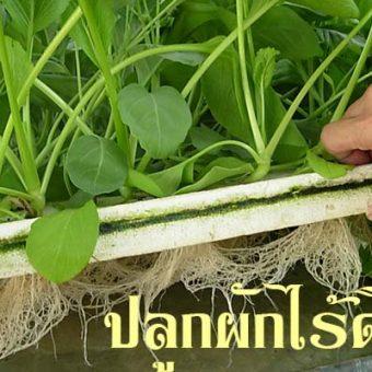 เกษตรก้าวหน้า กับการปลูกผักไร้ดิน คืออะไรมาดูกัน
